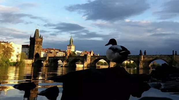 Власти Чехии признали отсутствие доказательств «ввоза яда» из России
