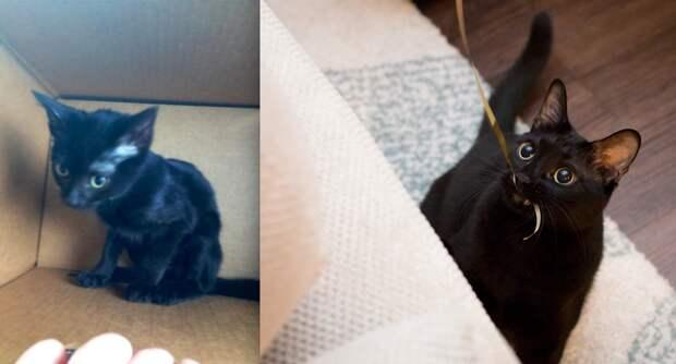 Дом меняет все: 35 фото котиков до и после усыновления