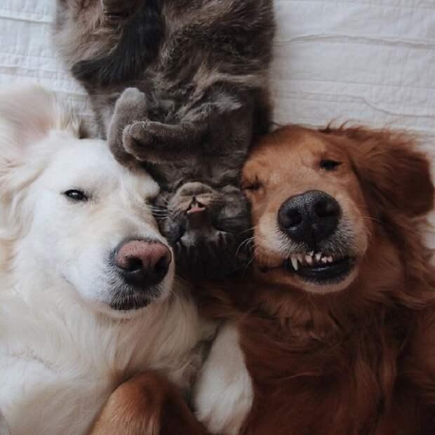 Добродушный кот Гарри в окружении своих четвероногих друзей.