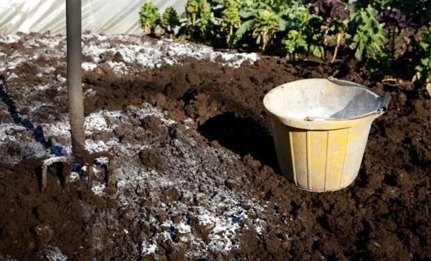 Сколько извести нужно вносить в почву на участке?