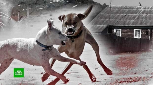 Растерзавшие ребенка собаки терроризировали башкирское село с марта