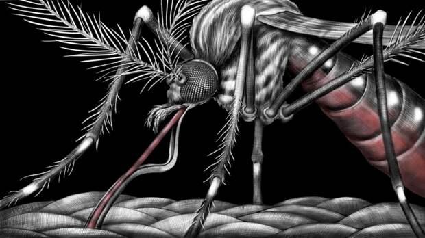 ГМО- комары  в большой биотехнологической игре