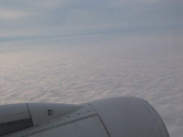 Совершивший аварийную посадку в Петербурге самолет попал в стаю птиц
