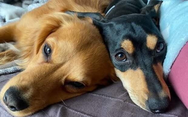 Электричество, отопление и теплый пол: ветеринар построил деревню для собак
