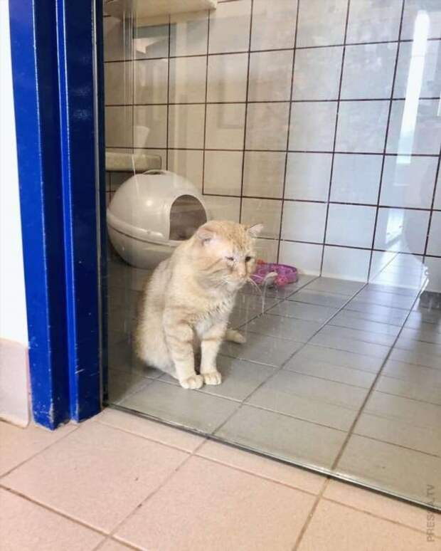 Спасение мистера Брюса Уиллиса — самого грустного кота