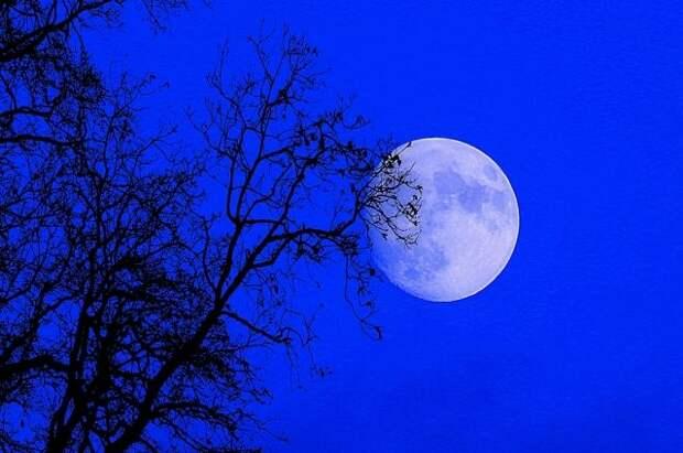 Лунный календарь садовода и огородника с 11 по 25 марта