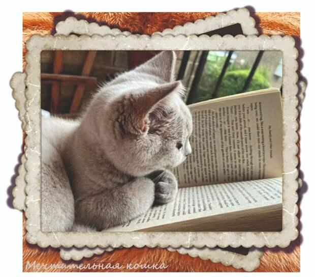 https://www.instagram.com/liuliu_the_cat/