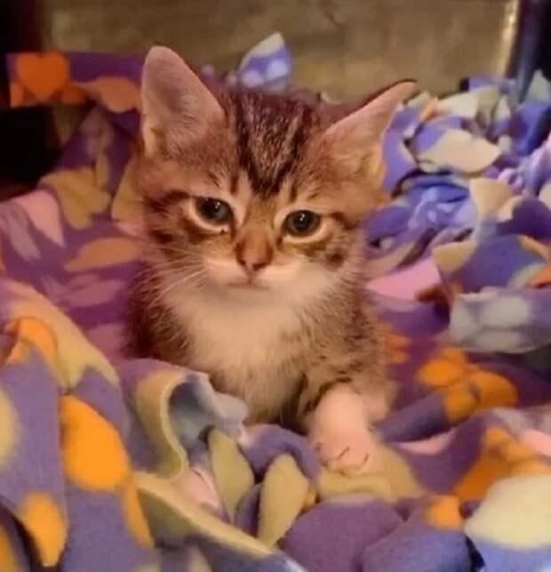 Бездомных котят хотели усыпить, хотя малыши были совершенно здоровыми