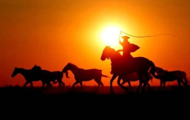 Кочевники одними из первых повсеместно использовали кнут. /Фото: tut.by