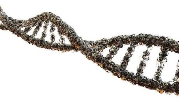 Cell: Нервные стволовые клетки быстро стареют