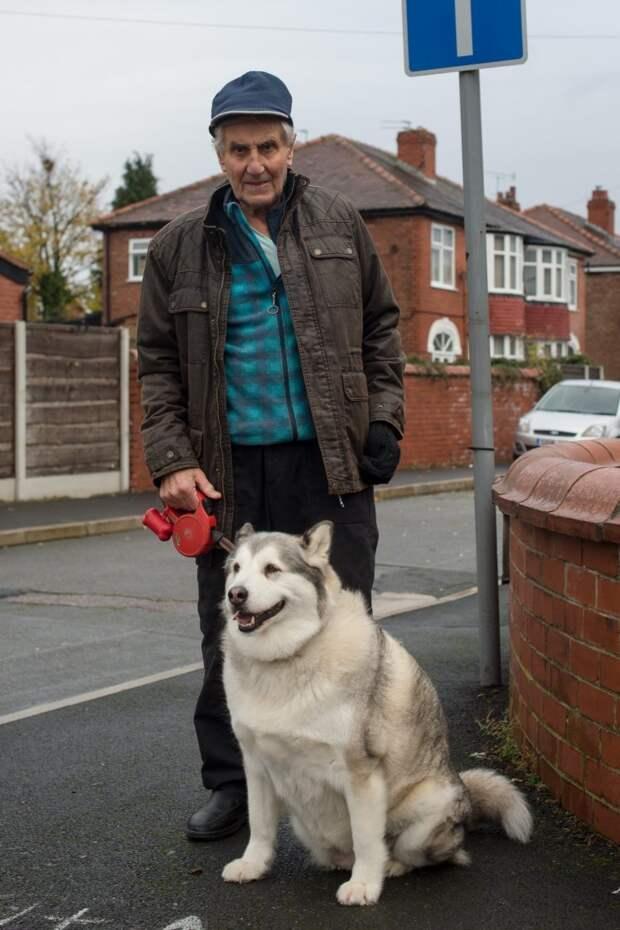 Британскую собаку оправдали в суде, потому что она… слишком толстая в мире, домашний питомец, животные, собака, суд, укус
