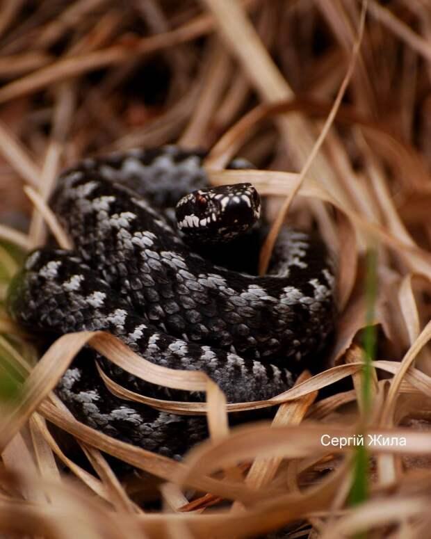 Фото змеи 1