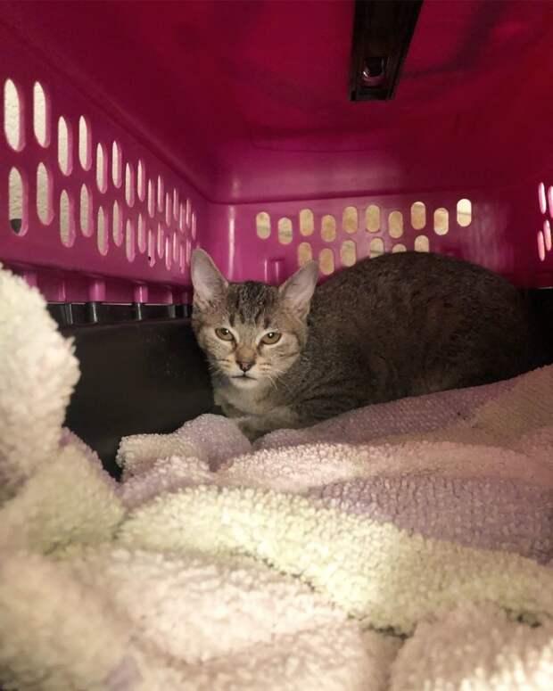 Перепуганная кошка прятала мордочку, никого не подпуская к себе история, история спасения, коты, кошка, кошки, помощь животным, спасение животных