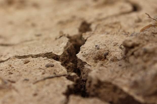 Удмуртия обратилась к соседним регионам за помощью в борьбе с последствиями засухи