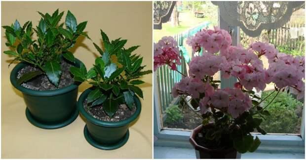 Ароматные комнатные растения: изысканный комфорт вашего дома