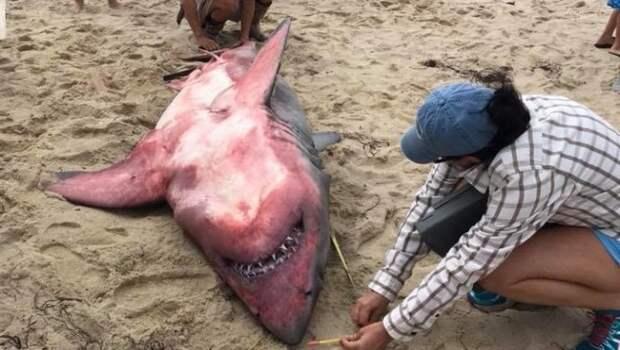 В США обнаружили «Белую» акулу красного цвета