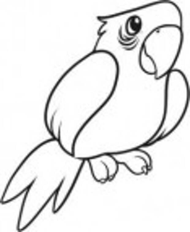 Где купить попугая