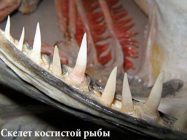 Извлечение крючка из пасти щуки иллюстрации, крючок, рыба, рыболов, фото, щука