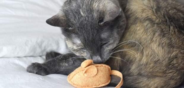 Как сшить игрушку кошке