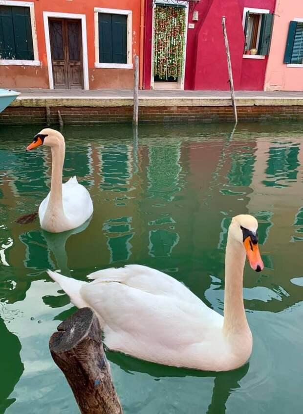 В Венецию приплыли дельфины