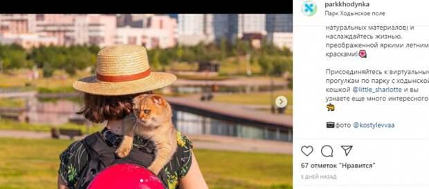 Фото дня: ходынская кошка похвасталась утренними прогулками