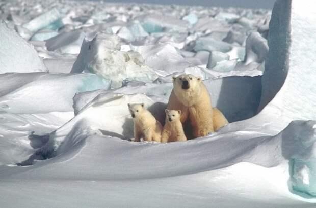 Арктика вступила в совершенно «новый климат»