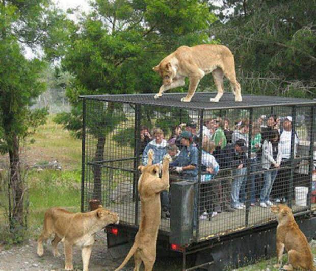 Ожидания и реальность: 19 забавных случаев, когда поход в зоопарк накрылся медным тазом...