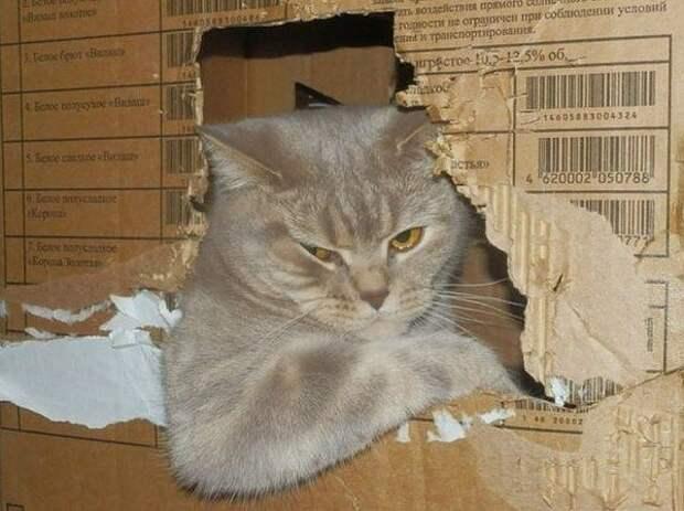 Коты, которые в прошлой жизни были таксистами водители, котики, такси