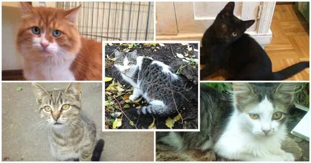 Донецкие мальчишки – в добрые руки!!! 5 кошачьих душ – каждый со своей историей и характером – просятся к домашнему очагу…