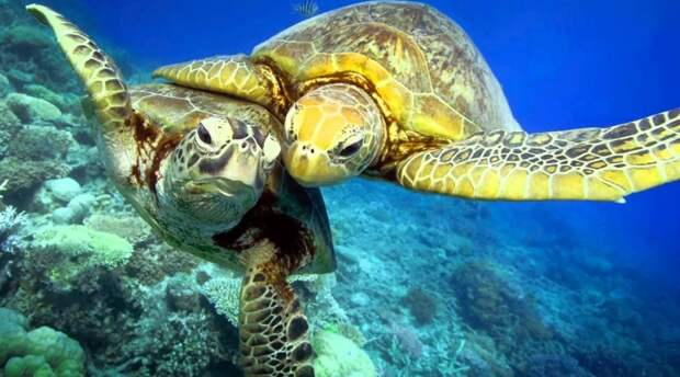 Биологи не могут объяснить, почему пингвины, акулы и черепахи плавают кругами