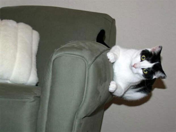 20  кошек, нарушающих законы физики