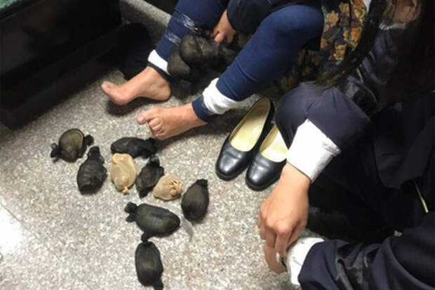 Китаянка носила под юбкой 24 мыши