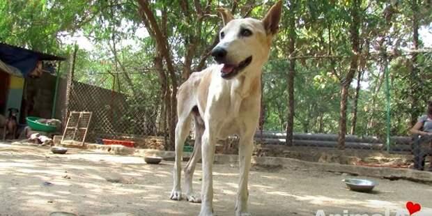 Больной уличный пес уже перестал бороться, как вдруг поднял голову и увидел спасателей