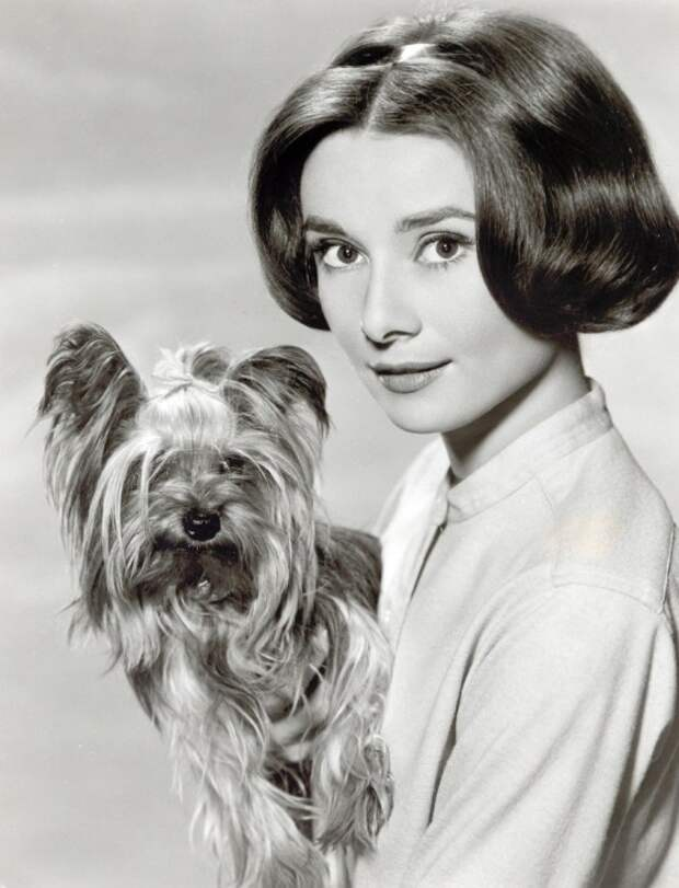 Одри Хепберн, йоркширский терьер Мистер Знаменитость. Фото / Audrey Hepburn, Yorkshire terrier Mr. Famous. Photo