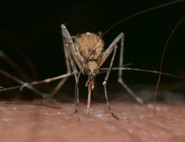 Сочинские экологи начали бесплатно раздавать рыбу для борьбы с комарами
