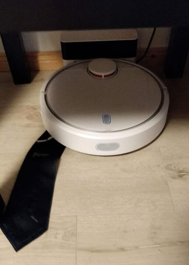 25 доказательств того, что роботы-пылесосы— тееще проказники