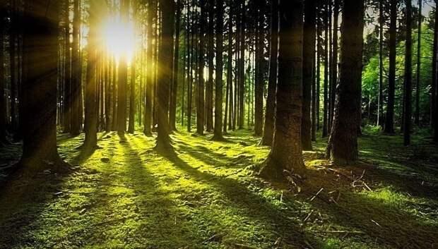 Лесопарковые зоны в Подольске открыты для одиночных и семейных прогулок