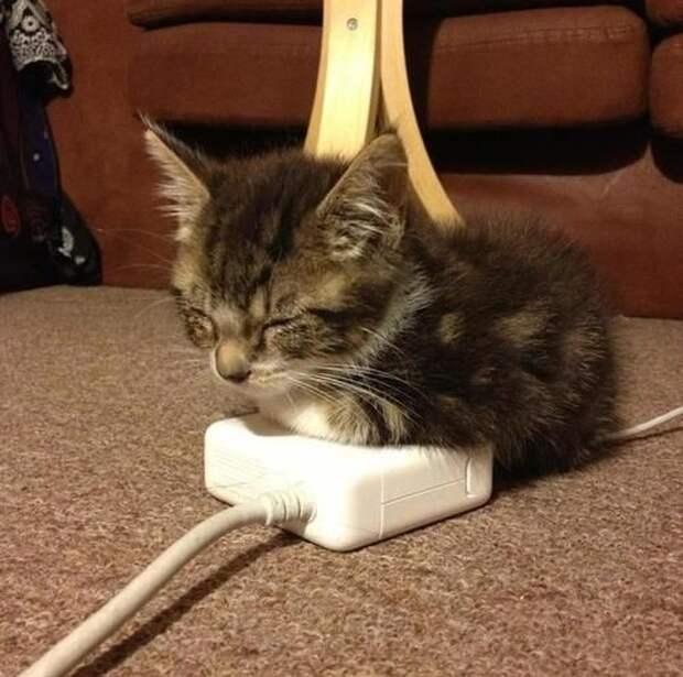 Эти кошечки излучают море тепла, уюта и покоя...