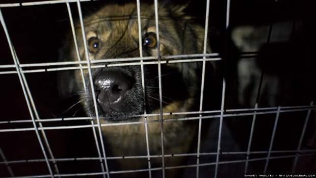 Пора чиновникам Севастополя устроить «собачью жизнь» в приюте?