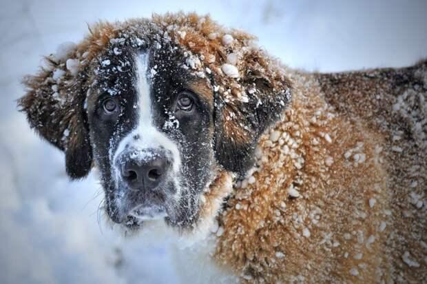 Собаки из приюта на Машкинском шоссе примут участие в благотворительном фестивале