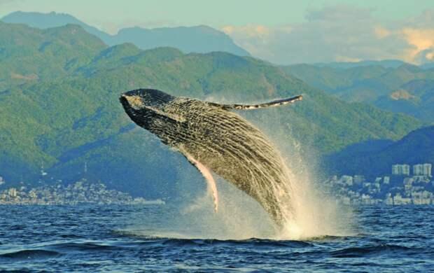 Экотуризм познакомит вас с китами и дельфинами: где их можно встретить