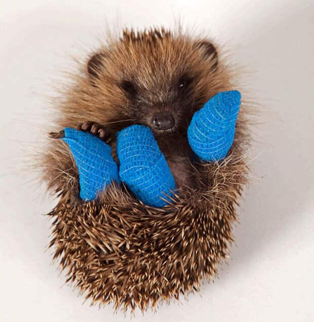 15 трогательных фото животных в гипсе, которых так и хочется пожалеть
