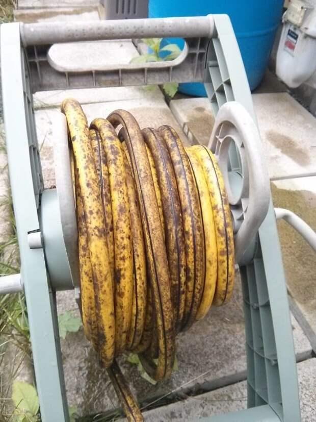 Шланг, похожий на связку перезревших бананов интересно, не еда, несъедобное, поразительно, странные сближенья, съедобное, удивительно, удивительное рядом
