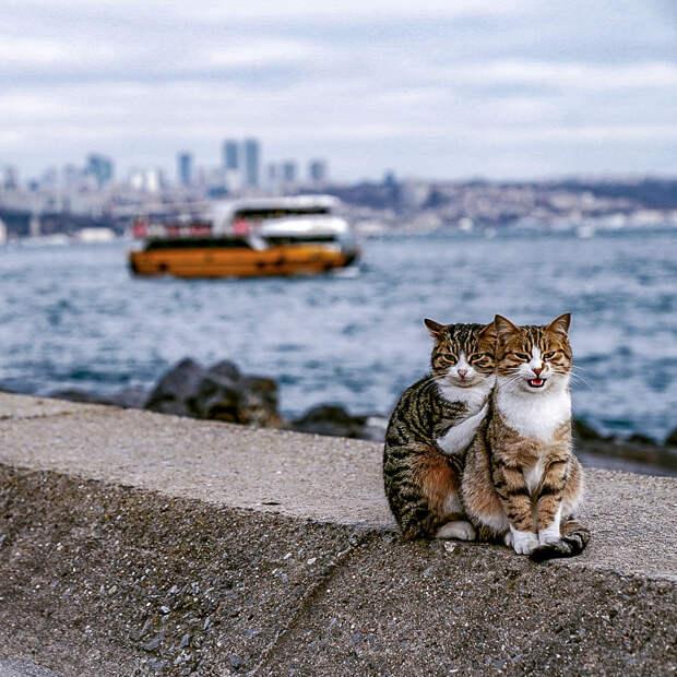 Я сфоткал двух обнимающихся бездомных кошек - клянусь, это не поставнока!