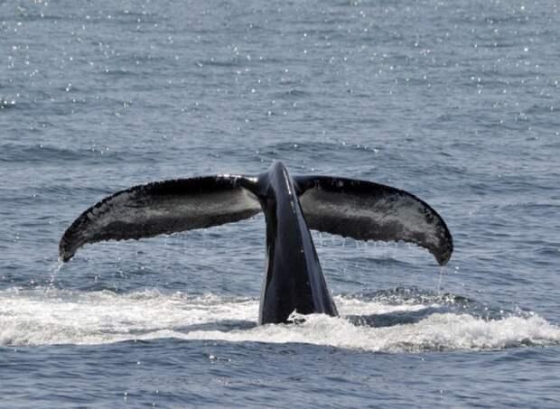 В Хабаровск доставили вторую группу косаток из «китовой тюрьмы»
