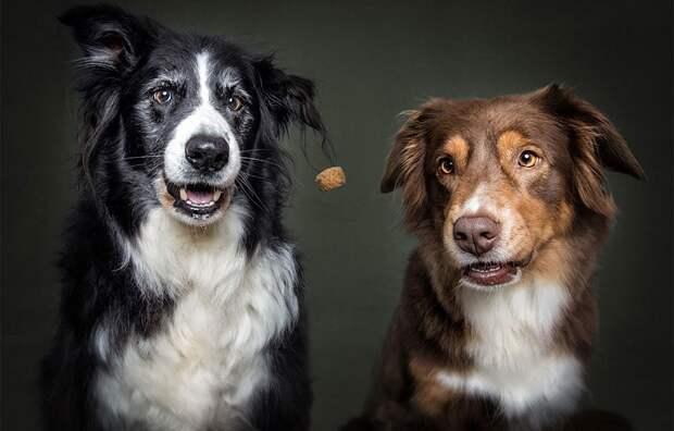 Бордер-колли – самые умные среди собак, поэтому и реакция соответствующая.