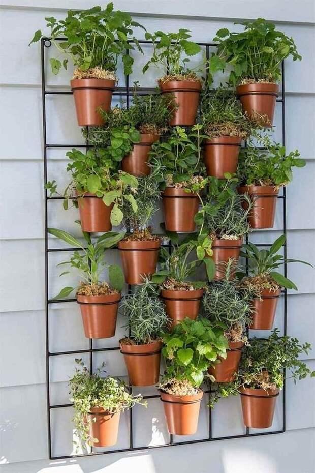 Интересные способы озеленить квартиру зеленый, лестницы, полки, растения, этажерки