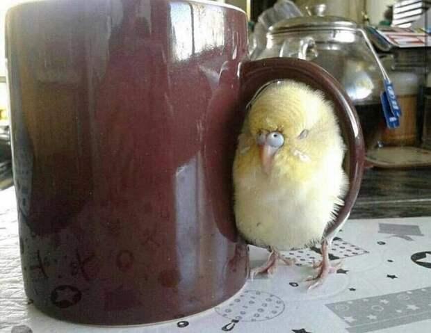 Смешные птички