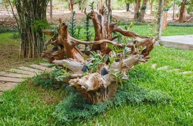 Рутарий — украшаем участок корягами, 10 интересных идей с фото