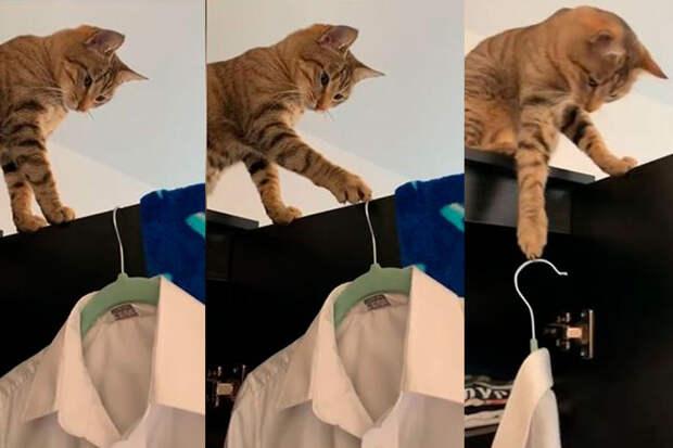 «Убери это»: кот, приучающий хозяйку кпорядку, попал навидео